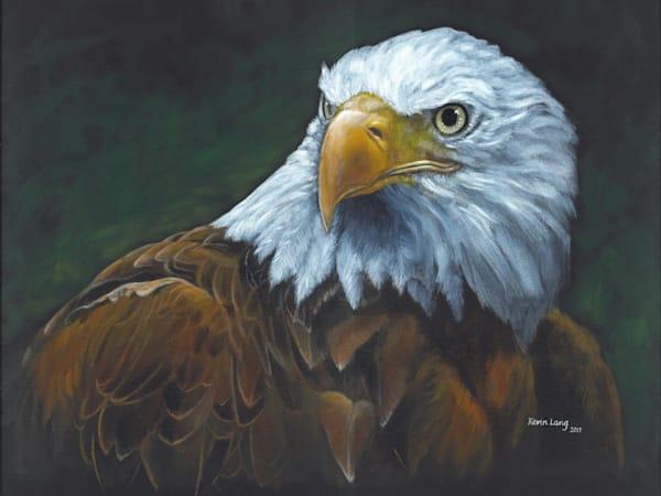 Old Abe   American Bald Eagle Art | Kevin Lang Fine Art