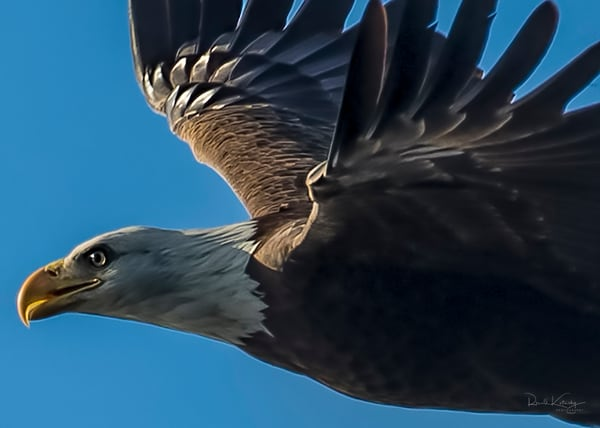 Fly with the Eagles Photograph