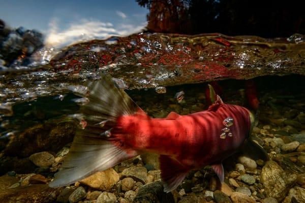 Upstream Battle 1