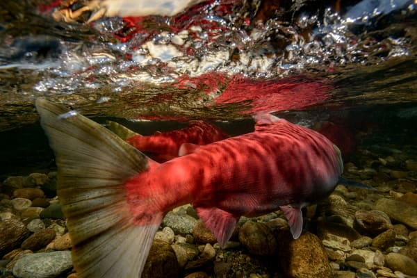 Upstream Battle 2