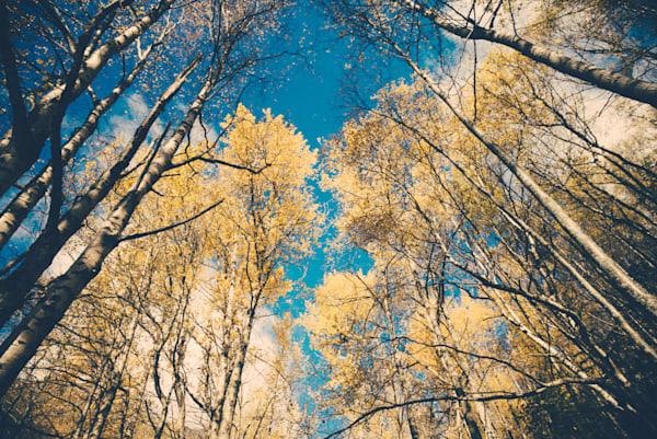 Alaskan Arches of Autumn  Kirby Trapolino Fine Art Photography