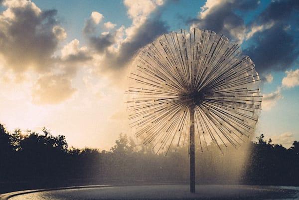 Dandelion Daydreams| Kirby Trapolino Fine Art Photography