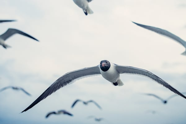 Eye Contact | Kirby Trapolino Fine Art Photography
