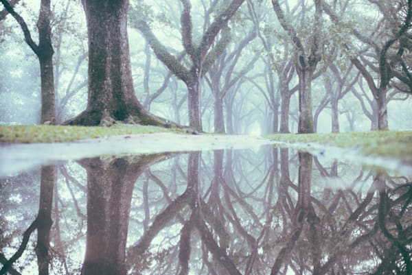Reflecting Foggy Recollections | Kirby Trapolino Fine Art Photography