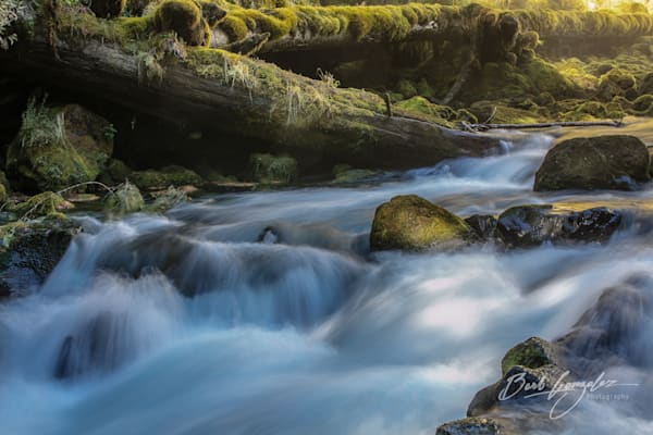 Powerful River over mossy rocks and logs photo for sale by Barb Gonzalez Photography