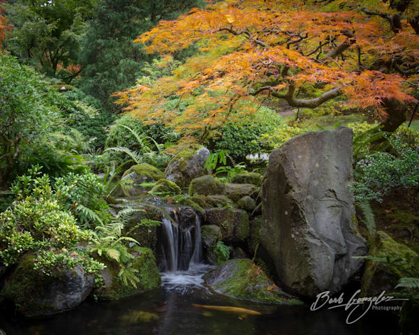 Autumn tree color in this photo of Portland Japanese Gardens for sale by Barb Gonzalez Photography