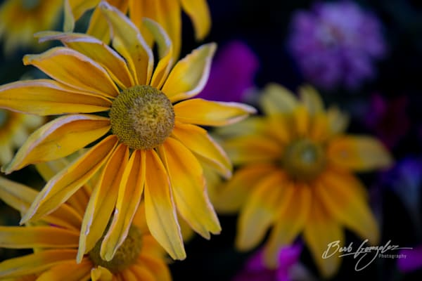 Yellow and Purple Flowers fine art photo for sale by Barb Gonzalez Photography