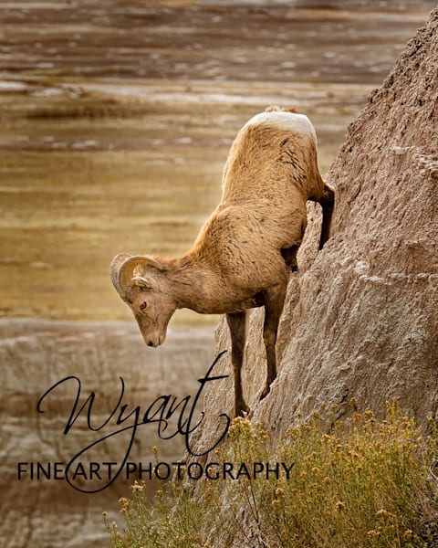 Going Down Badland Style: Shop Fine Art Photography | Jim Wyant, Master Craftsman (317)663-4798