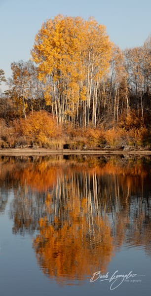Tall Orange Autumn Trees reflected in Deshutes River fine art photo by Barb Gonzalez Photography