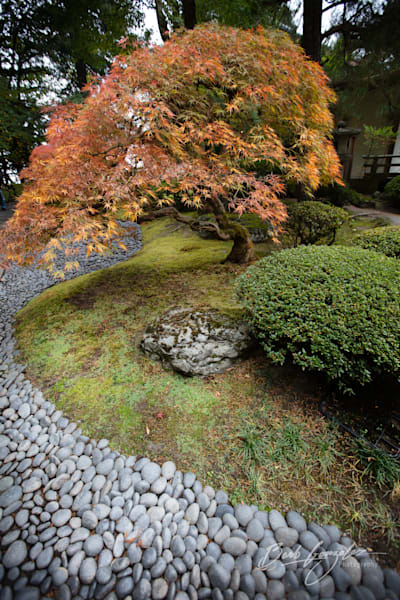 Portland Japanese Gardens rock river and maple in autumn fine art photo by Barb Gonzalez Photography.