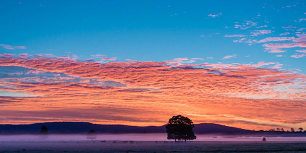Woodville Treasure - Hunter Valley NSW Australia | Sunrise