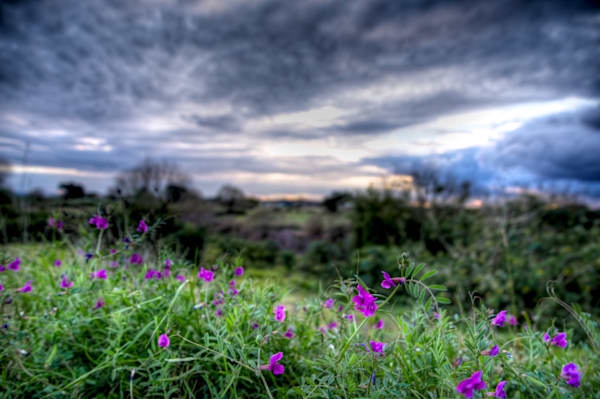 Wildflowers - Maitland Hunter Valley NSW Australia | Limited Edition