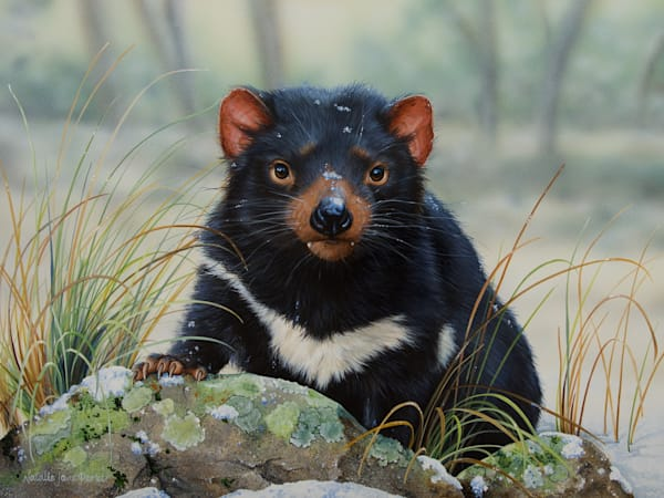 Winter Whiskers - Tasmanian Devil | Natalie Jane Parker | Wildlife Australian Native Fauna