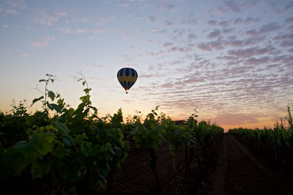 Vine Flight - Pokolbin Hunter Valley Wine Country NSW Australia | Hot Air Balloon