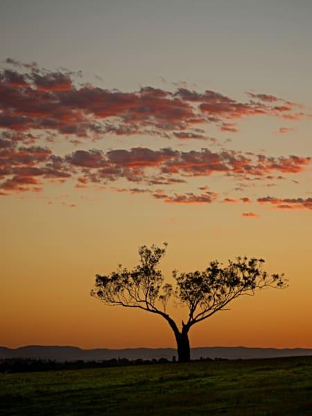 Sunset Sentinel - Maitland Hunter Valley NSW Australia | Sunset