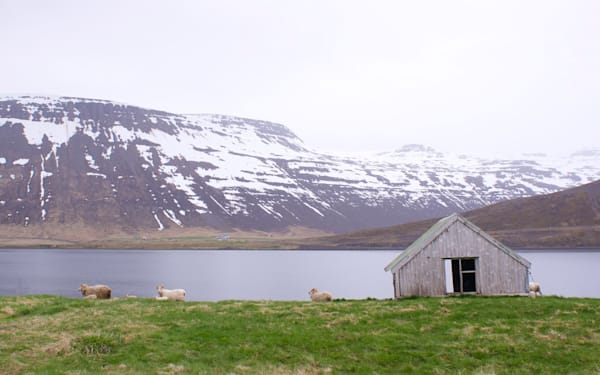 Sheep Shelter - Iceland