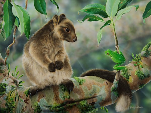 Meeting the neighbours | Juvenile Lumholtz Tree Kangaroo with A White Lipped Tree Frog | Natalie Jane Parker Australian Native Fauna