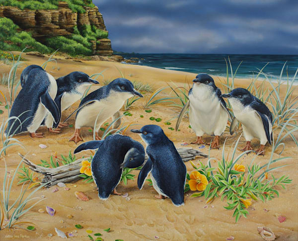 Local Fisherman - Little penguins | Natalie Jane Parker Australian Native Fauna