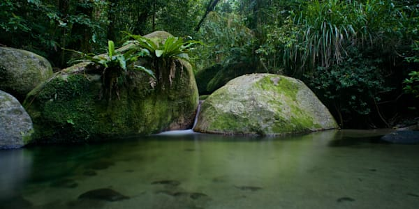 Kuku Yalanji Dreaming - Mossman Gorge Daintree Rainforest Queensland Australia | Limited Edition Dreamtime