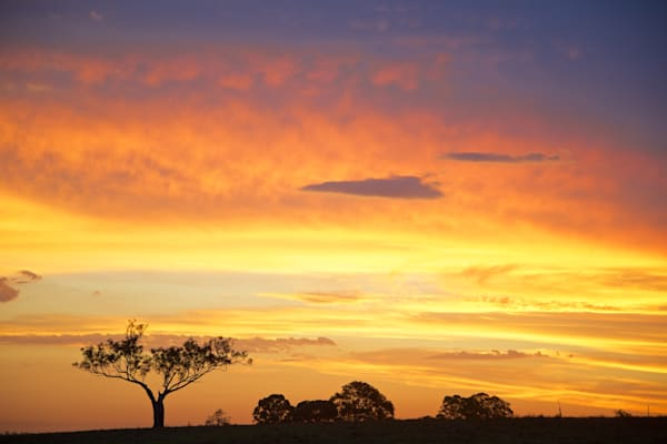 Golden Sentinel - Maitland Hunter Valley NSW Australia | Sunset