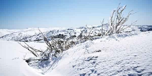 Emerging - Perisher Kosciuszko National Park NSW Australia | Snow