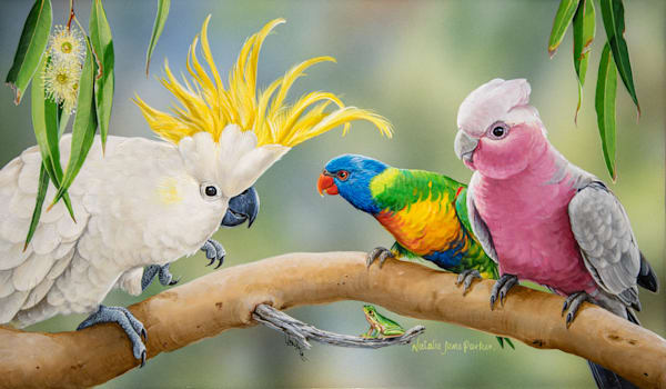 Colourful Company - Sulphur Crested Cockatoo Rainbow Lorikeet Galah And Eastern Dwarf Tree Frog | Natalie Jane Parker Australian Native Fauna
