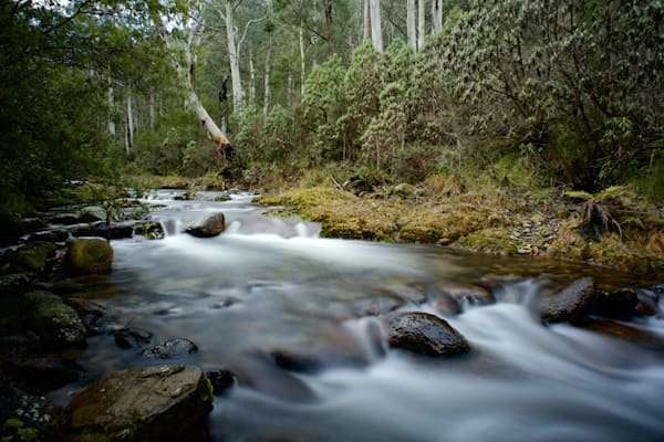 Alpine Flow - Leatherbarrel Creek Khancoban Kosciuszko National Park NSW Australia | Waterfall
