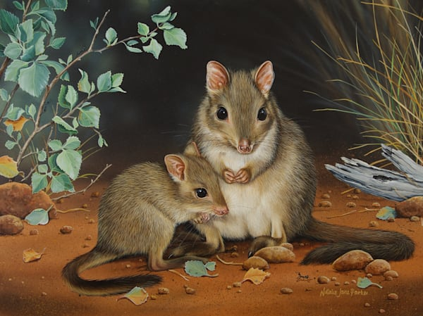 A Brush with the Bush - Brushtailed Bettongs | Natalie Jane Parker Australian Native Fauna Print