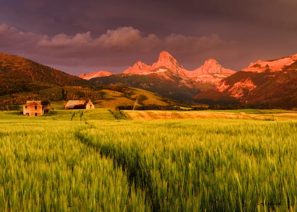 1589 Teton Harvest