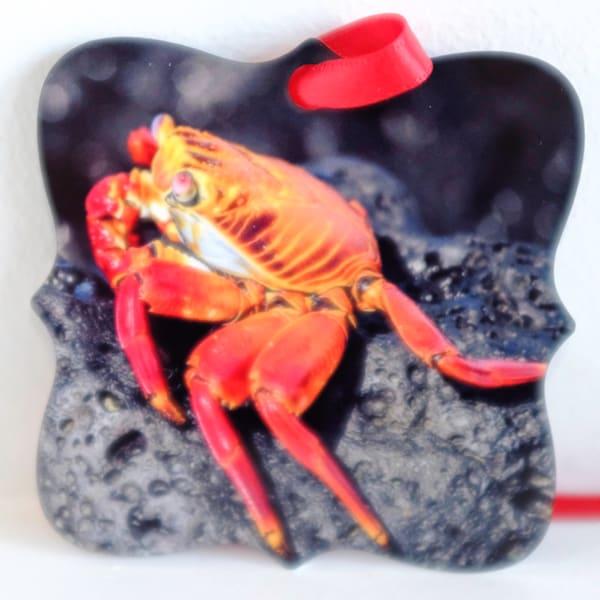Sally Lightfoot Crab on rock Galapagos metal ornament