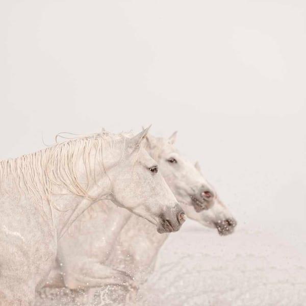 Three Horses Photography Art | DE LA Gallery