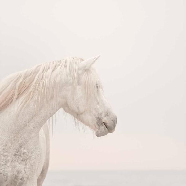 Unicorns Do Exist Photography Art | DE LA Gallery