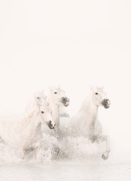 Pegasus Iii Photography Art | DE LA Gallery