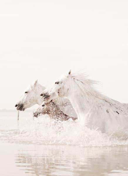The Herd Photography Art | DE LA Gallery