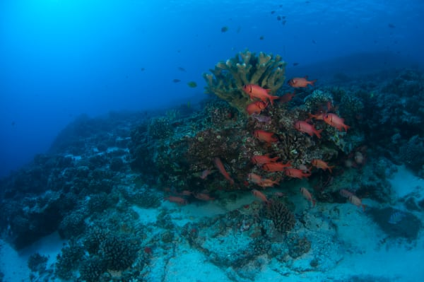 Reefs End