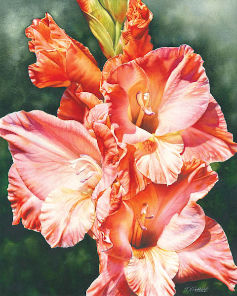 Glorious Gladiola watercolor painting 16x20