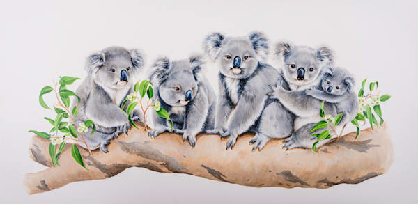 Koala Company - Koala Line On A Branch Natalie | Jane Parker | Australian Native Wildlife