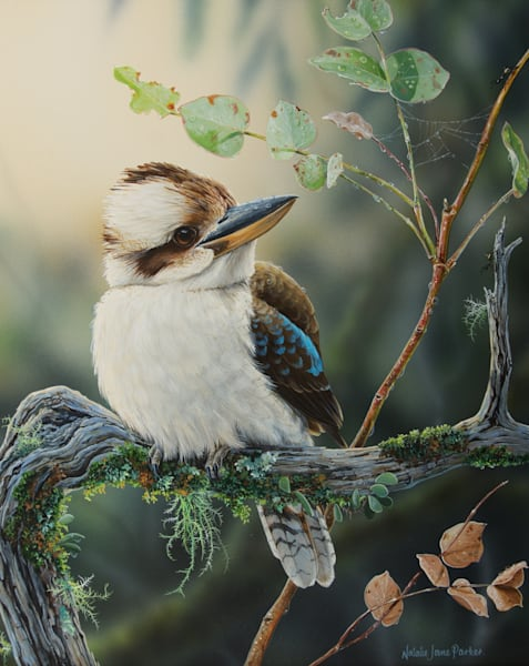 A Winter's Morning - Laughing Kookaburra | Natalie Jane Parker | Australian Native Wildlife