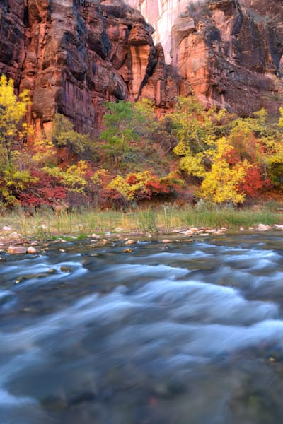 Autumn in Zion with doe