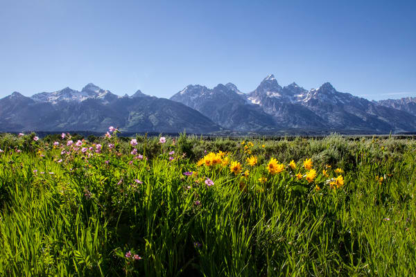 Grand Tetons of Summer