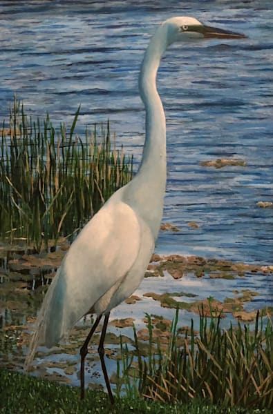 Ibis White Heron Art | Marci Brockmann Author & Artist