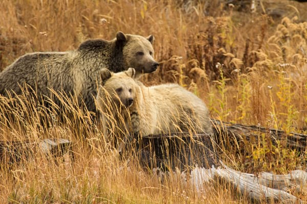 Momma Griz and Baby Blondie