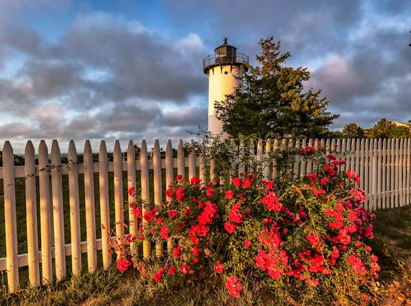 East Chop Light Roses
