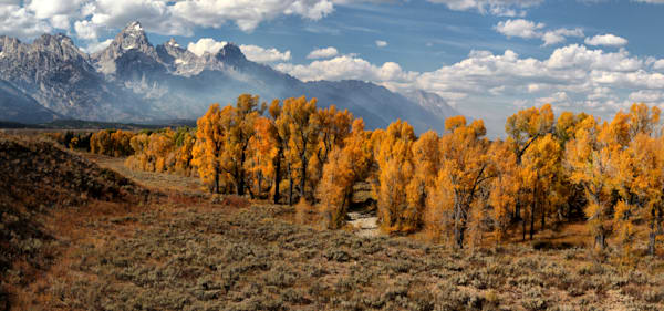 Tetons Over the Cottonwoods