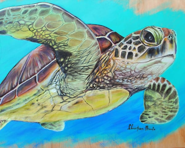 Art on Demand   Flying Turtle by Christian Bendo