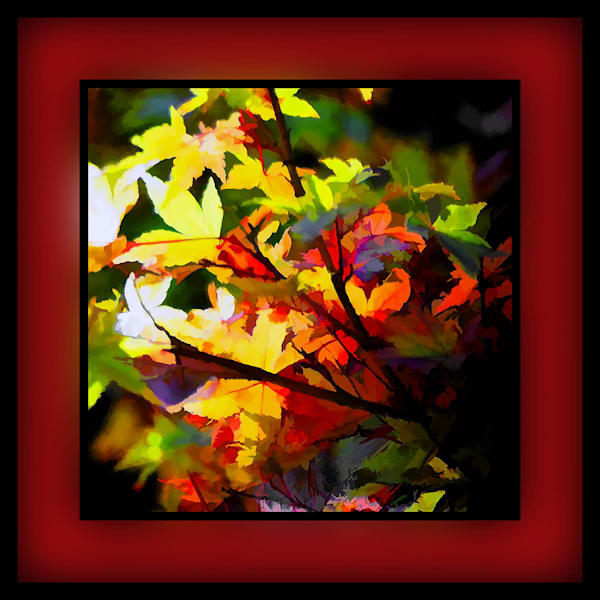 16x16 Fall Mixture Red on Paper