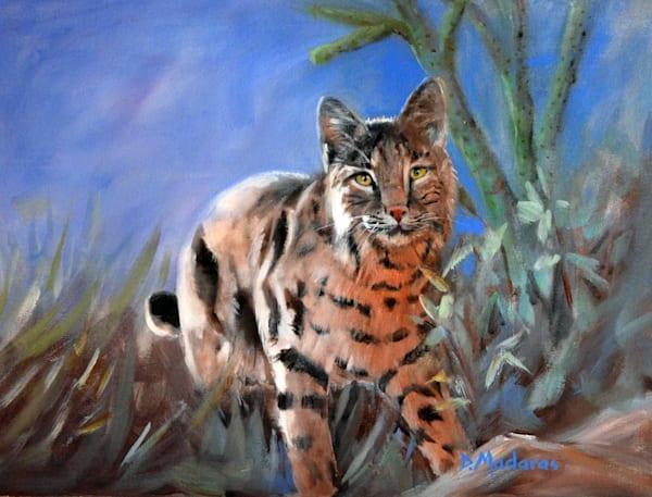 Bobcat in the Backyard by Diana Madaras