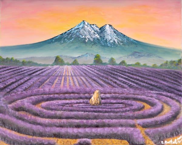 Mt Shasta Lavender farm: Shop Print / Errymil Batol Art