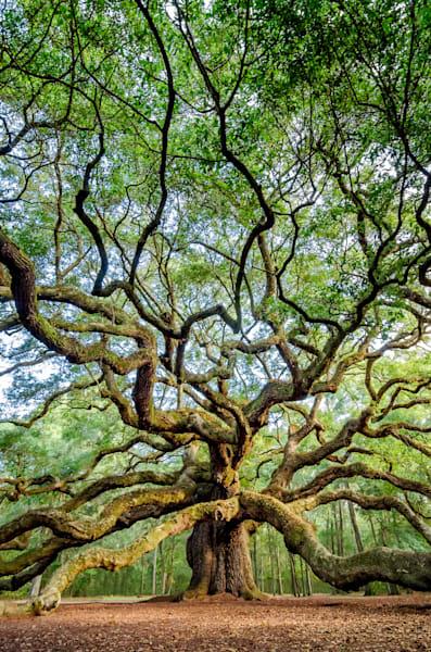 Angel Oak Vertical