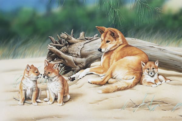 Triple Trouble - Dingo with pups Natalie Jane Parker Australian Native Wildlife